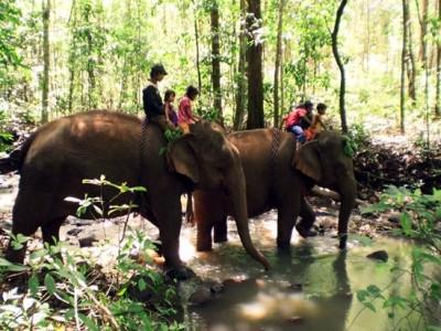 Modulkiri trek and elephant ride